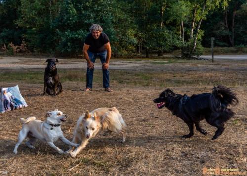 2018-08-22 Honden Reunie 013