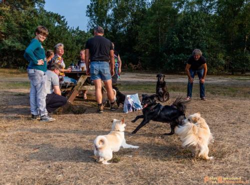 2018-08-22 Honden Reunie 014